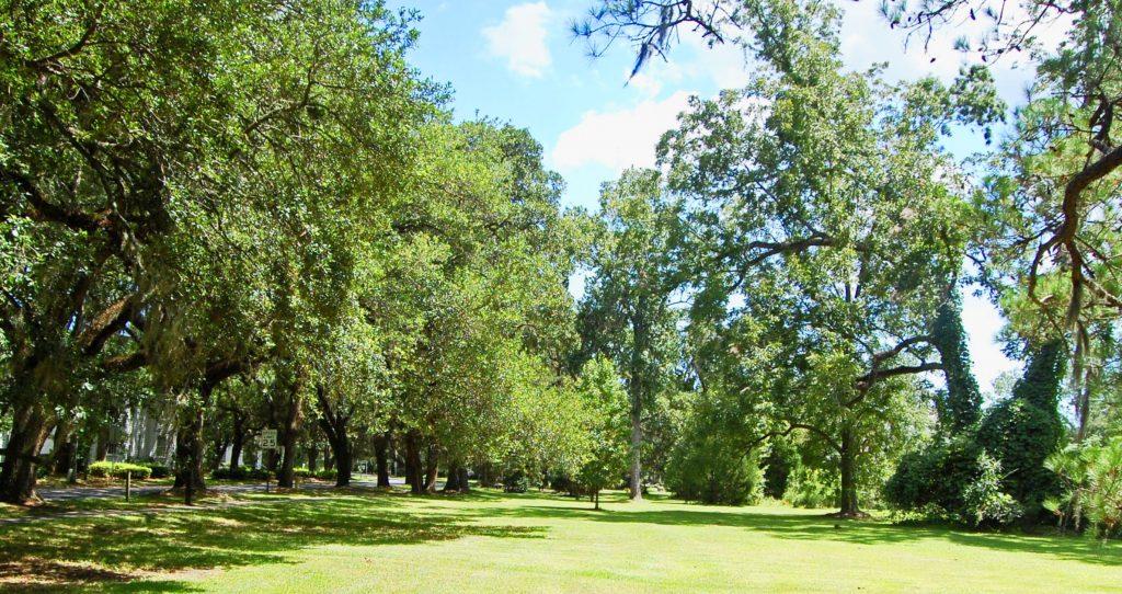mclellanville trees